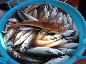 pescaturismo (6)